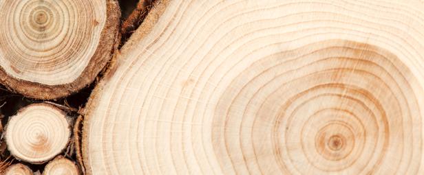 Cucine artigianali chef del legno - Cucine artigianali in legno massello ...
